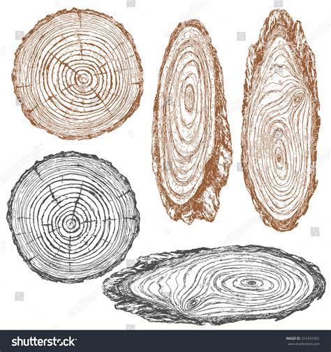 cross section tree round oval cross section tree trunk stock vector 314741561
