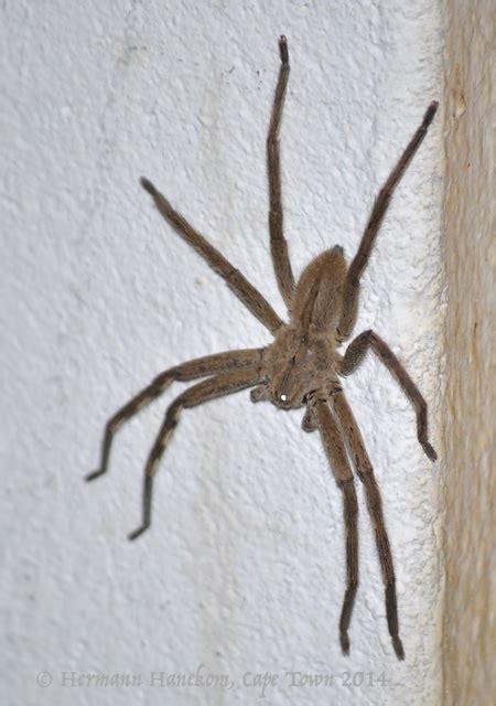 rain spiders newsferret