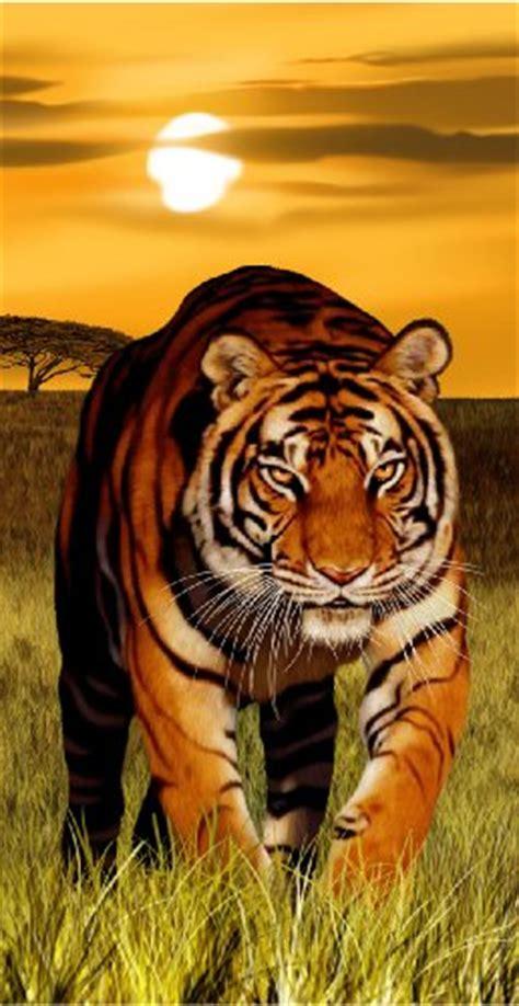 tiger bathroom designs toilet accessoires tiger 072050 gt wibma com ontwerp
