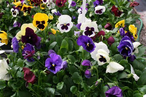 Activador de flores para todo tipo de plantas 75 00 en