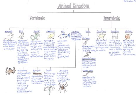 Animal Classification Worksheet by Yksd Physical Science Chapter 5 Lesson 1 Quot What Are Some