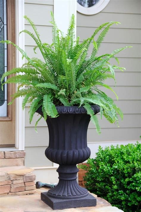 kimberly fern urn container planting front porch