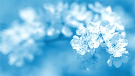 Wedding Background Light Blue by Blue Wedding Backgrounds Hd Www Pixshark Images