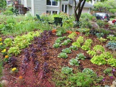 the edible front yard edible front yard landscape garden edibles