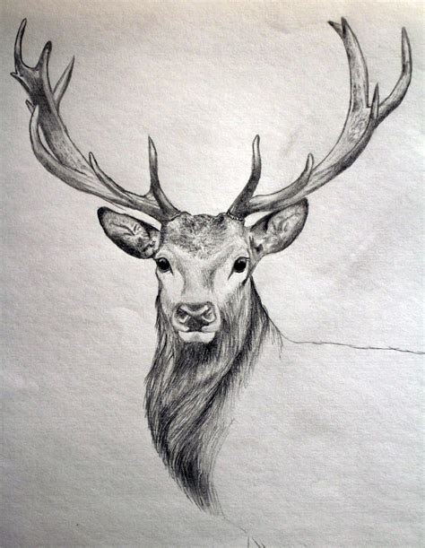 drawing and painting animals drawing after hunting pinteres
