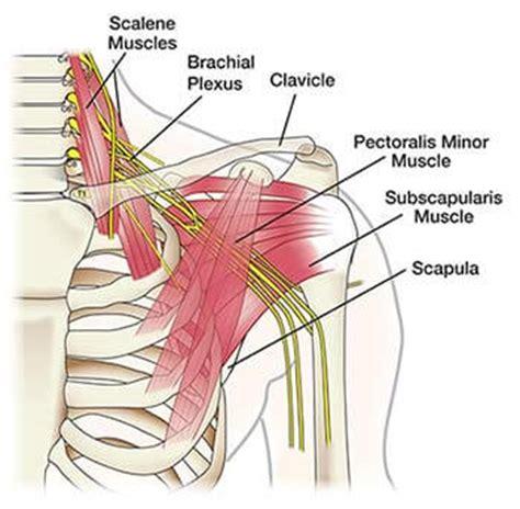 Msm Detox Symptoms Aching Shoulder Arm by Shoulder Arm Treatment Doctors Top Specialists