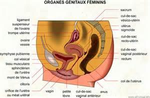les organes g 233 nitaux le royaume de dieu