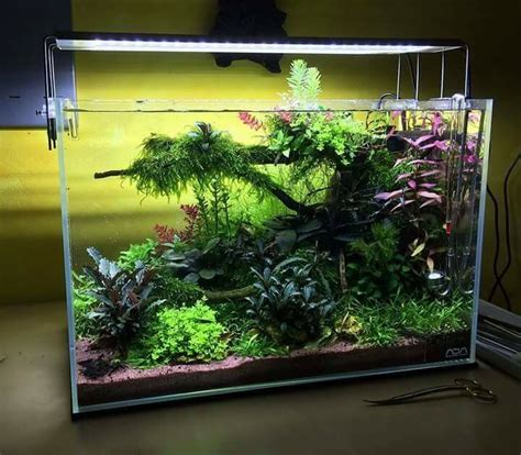 aquascaping planted tank best 25 nano aquarium ideas on pinterest freshwater