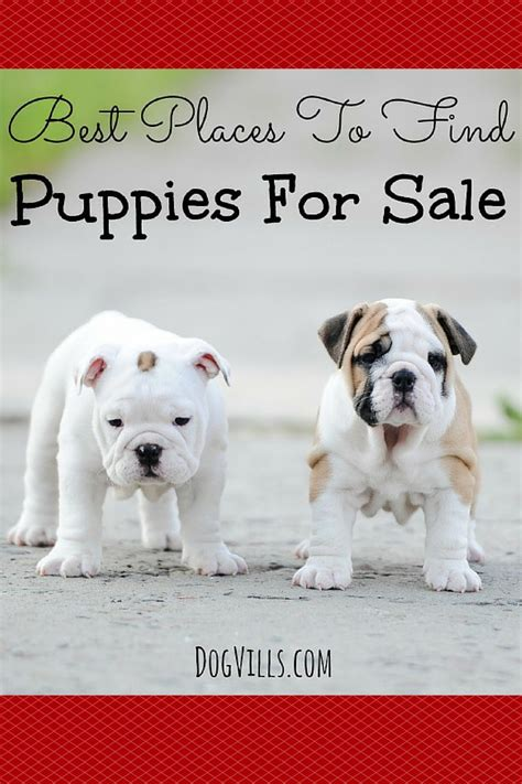 places to buy puppies best places to find puppies for sale vills