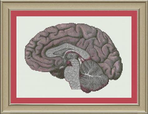 human brain cross section human brain cross section cool anatomy cross stitch pattern