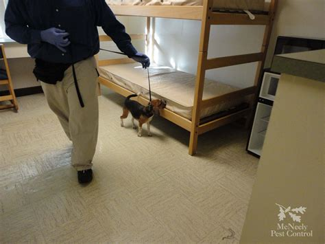 u in bed university college bed bug remediation mcneely pest
