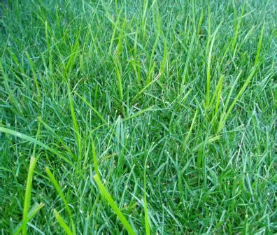 what does it get light out in pa how to kill nutsedge violet and other