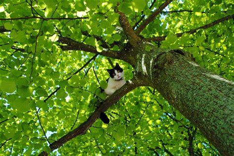in tree cat in a tree capturing my world paul abspoel