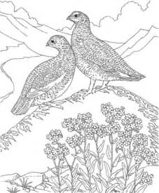coloring pages for adults birds printable bird coloring pages printable