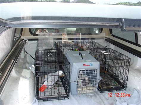 caring for your pet bird vet care