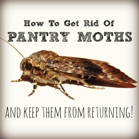 How To Get Rid Of Pantry Moths In Your House 25 best ideas about pantry moths on moth repellent meal moths and stain removers