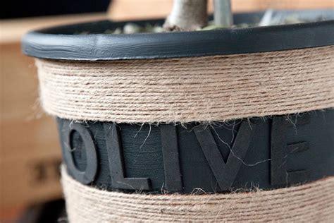 concime per olivo in vaso coltivare ulivo in vaso piante in giardino consigli