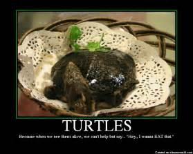 Funny Turtle Memes - tortoise meme memes