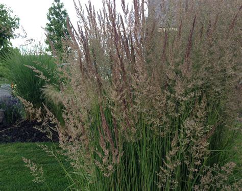 Ornamental Grasses: Update Your Curb Appeal with Just One