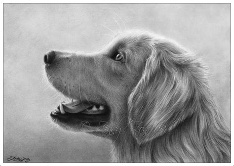 Retriever Drawing golden retriever where s my treat by zindy on deviantart