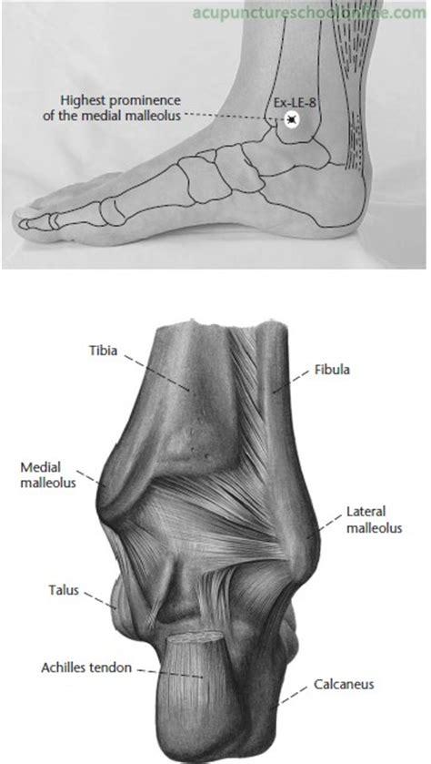 ex le ex le 8 medial malleolus tip neihuaijian acupuncture