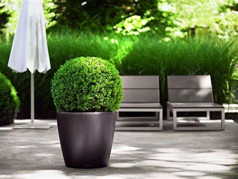 vasi per terrazze piante per terrazze piante da terrazzo piante per terrazzo