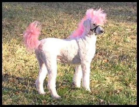 doodle pet pony the ponydoodle