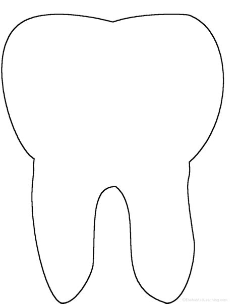 Tooth Writing Template by Tooth Anatomy Enchantedlearning