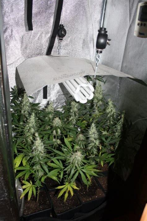 chambre de culture cannabis cultiver du cannabis en espaces r 233 duits du growshop
