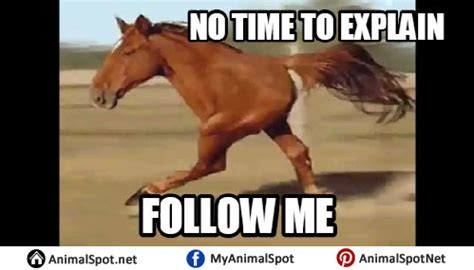Gay Horse Meme - horse memes
