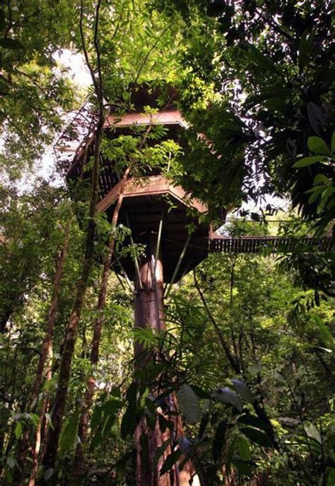 livable tree house designs spectacular tree house designs offering romantic and intimate living spaces