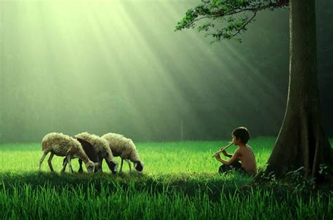 wallpaper anak gembala 36 enchanting pictures of kids playing around the world