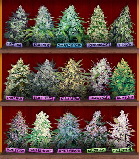best strain marijuana seeds canada buy cannabis seeds for sale