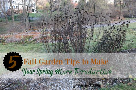 fall garden maintenance 5 fall garden maintenance tips to make productive