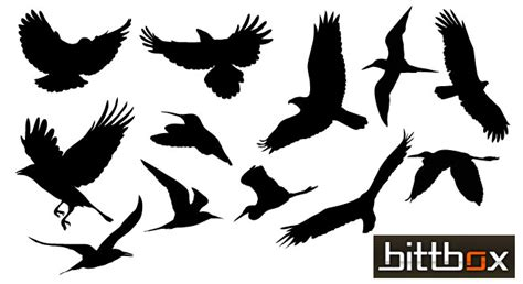 graphics of birds cliparts co