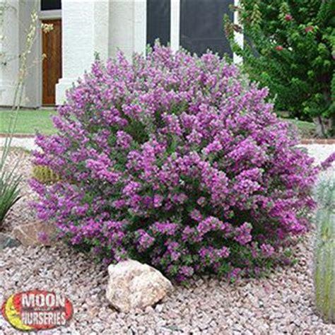 best all year plants shrubs moon valley nurseries