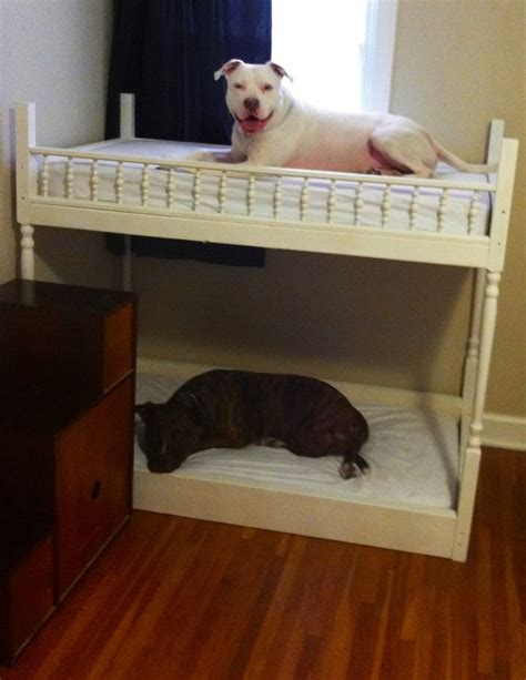 dog bunk bed dog bunk beds dogs and the like pinterest