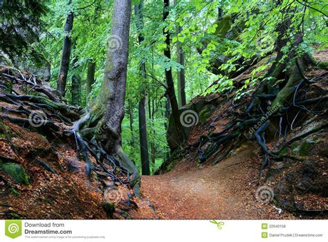 view of forest habitat royalty free stock photograph in view of deciduous forest royalty free stock photos image