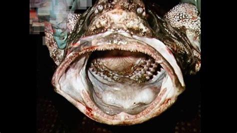 imagenes extrañas del mar criptozoologia monstruos y criaturas extra 241 as mar youtube