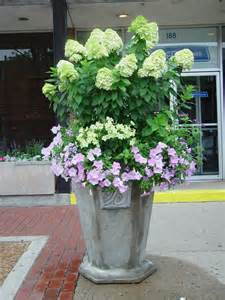 hydrangea container planting hydrangeas pinterest