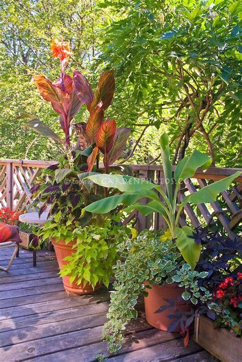 tropical container garden 73 best images about tropical container gardening on