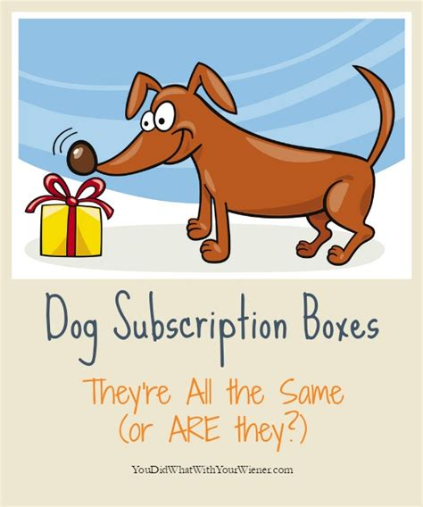 monthly subscription boxes for dogs monthly box subscription box cat subscription box
