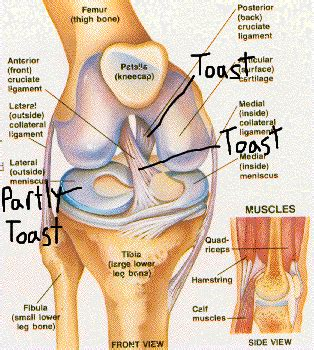 diagram of knee knee joint anatomy diagram knee free engine image for