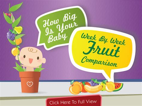 fruit 11 weeks baby size fruit comparison chart how big is your baby