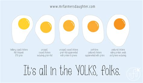 egg yolk color organic eggs archives mr farmer s