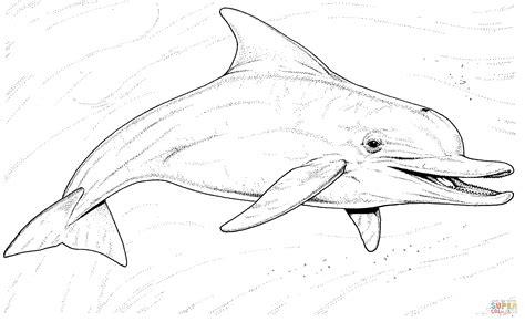 river dolphin coloring page disegno di il delfino comune a becco lungo da colorare