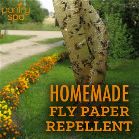 Make Your Own Fly Paper - diy flypaper fly repellent recipes