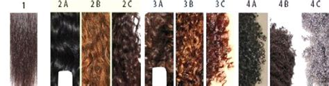 Curly Hair Types Chart by Hairstyles For Type 3a Curlyhair Hairstyle Gallery