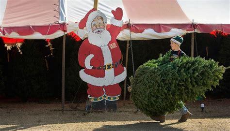 christmas tree farms papa noel christmas tree farm texas