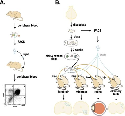 pattern formation in nonequilibrium systems stem cells and pattern formation in the nervous system neuron